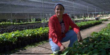 Fondo Marena - Cacao en el vivero