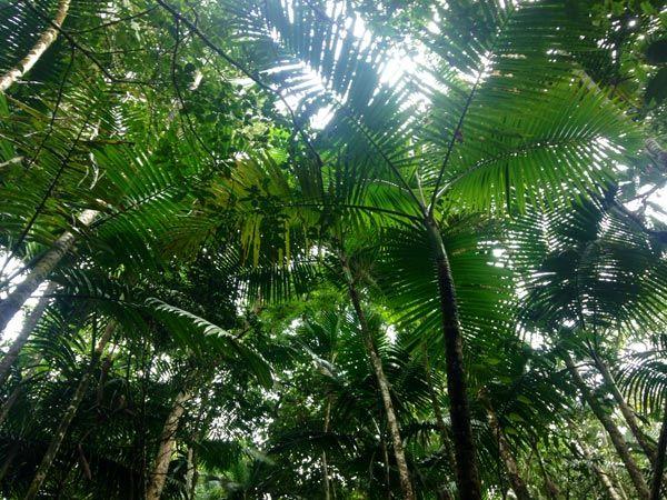 Loma Quita Espuela - Cobertura boscosa