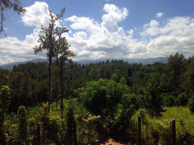 Bosques cordillera central