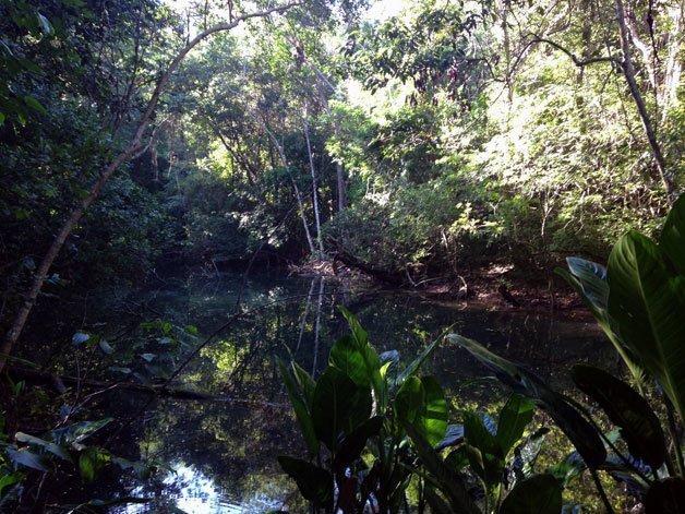Bosque Reserva Biológica Loma Charco Azul
